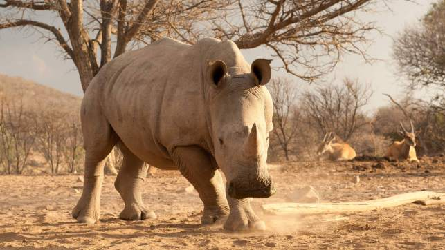Freezing rhino genetics now for the future