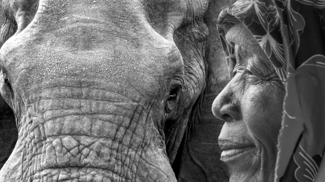 WHEN THE WISE MEET THE WISE  - elephants and grandmothers!