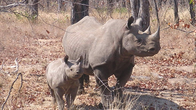 Save our Rhinos