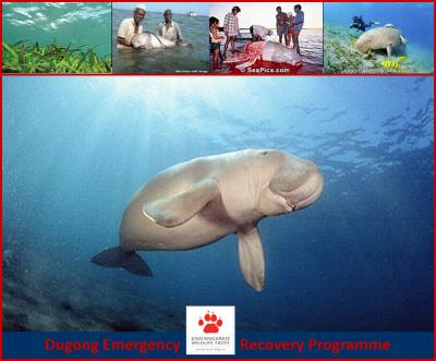 Dugongs Endangered