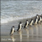 runningforpenguins